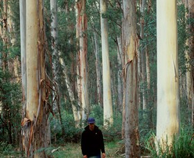Blue Gum Forest - Attractions Sydney