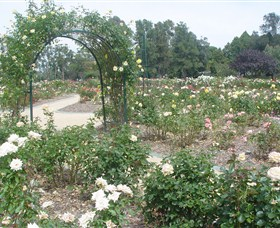 Victoria Park Rose Garden - Attractions Sydney