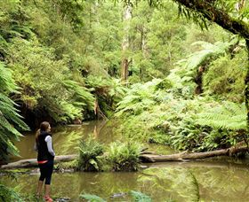 Morwell National Park - Attractions Sydney