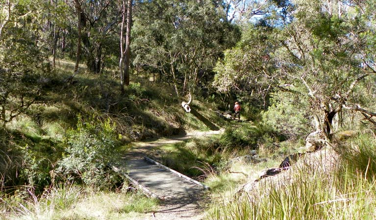 Wollomombi walking track - Attractions Sydney