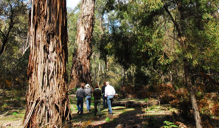 Tallaganda National Park - Attractions Sydney
