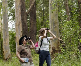 Chichester State Forest - Attractions Sydney