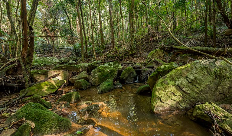Palm Grove Nature Reserve - Attractions Sydney
