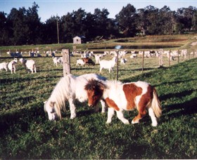 Trudgalong Farm - Attractions Sydney