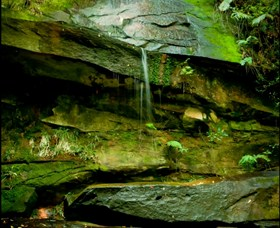 Strickland State Forest - Attractions Sydney