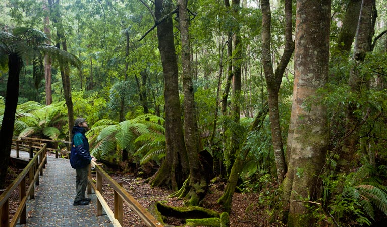 Monga National Park - Attractions Sydney