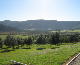 Hastings Valley Olives - Attractions Sydney