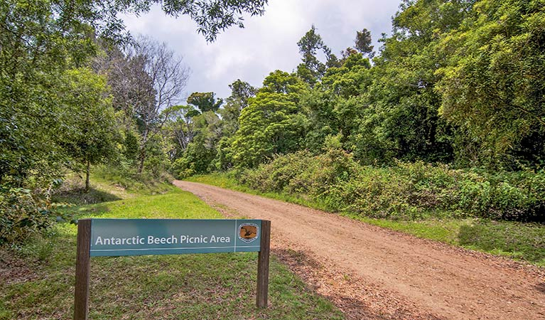 Antarctic Beech picnic area - Attractions Sydney