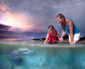 Tangalooma Dolphin Feeding - Attractions Sydney