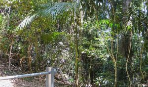 Goorgana walking track - Attractions Sydney
