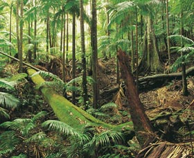 Wollumbin-Mount Warning National Park - Attractions Sydney