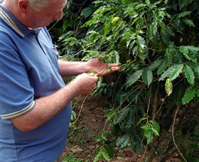 Wombah Coffee Plantation - Attractions Sydney