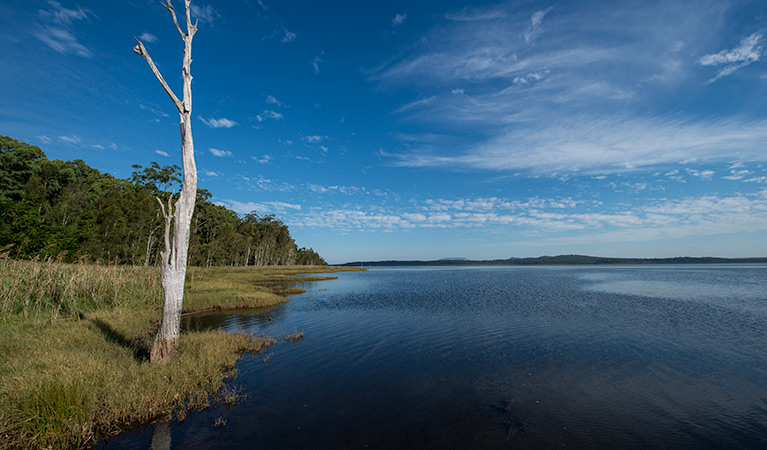 Lake Innes Nature Reserve - Attractions Sydney