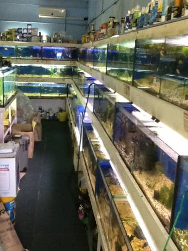 Clearwater Aquariums - Attractions Sydney