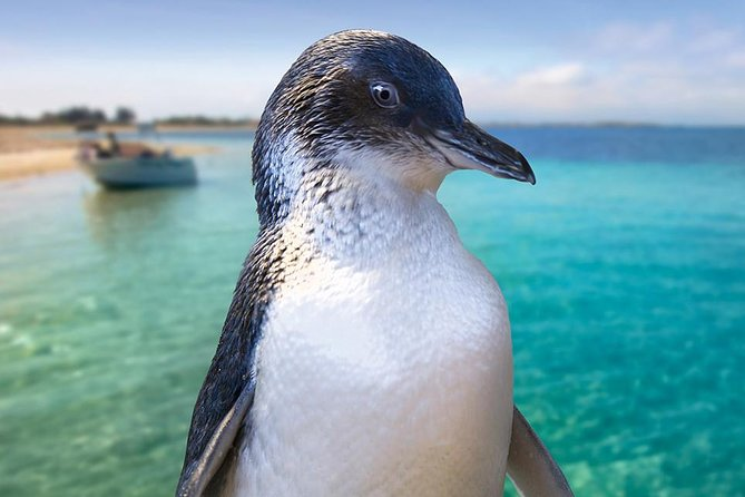 Full-Day Penguin Island  Fremantle Town - Attractions Sydney