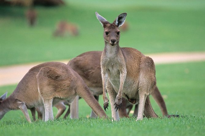Full-Day Perth, Fremantle, Swan Valley & Wildlife Park - Attractions Sydney