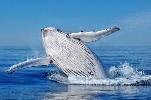 Whale Watching Dunsborough - Attractions Sydney