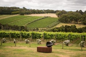 Montalto Vineyard Mornington Peninsula Discovery Wine Tasting and Lunch - Attractions Sydney