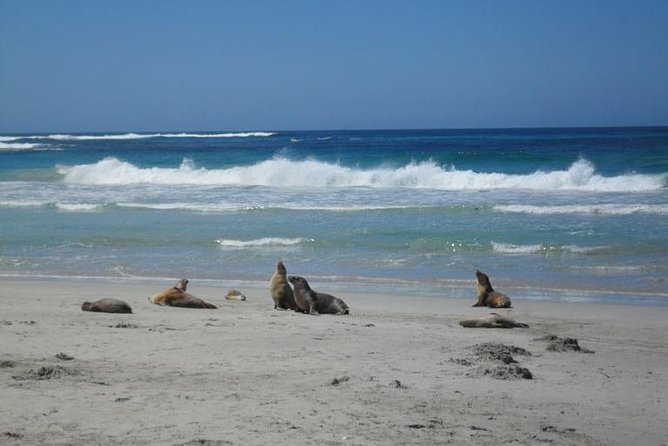 Kangaroo Island in a Day Tour from Adelaide - Attractions Sydney
