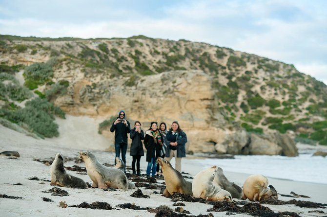 Small-Group Kangaroo Island 4WD Tour from Adelaide - Attractions Sydney
