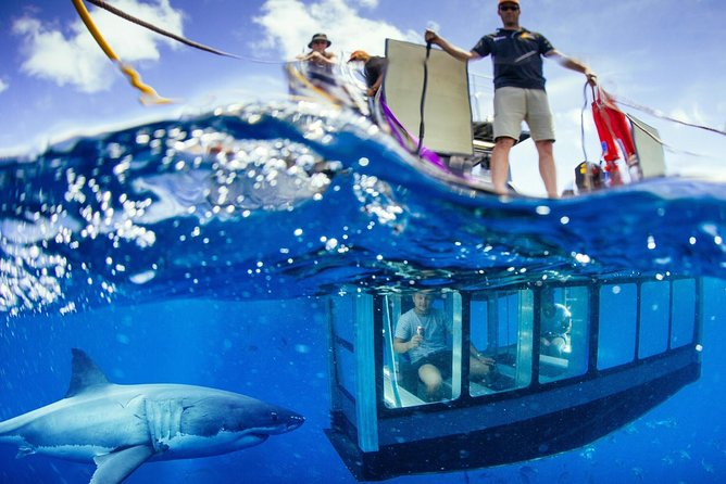 White Shark Tour with Optional Cage Dive from Port Lincoln - Attractions Sydney
