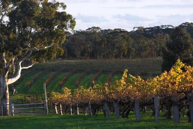 Barossa Valley with Hahndorf Tour from Adelaide - Attractions Sydney