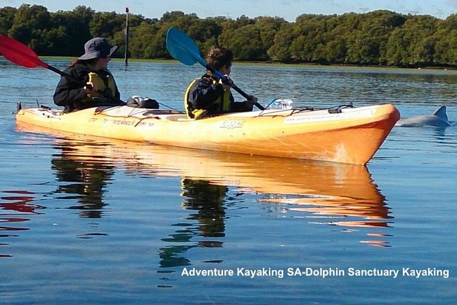 Dolphin Sanctuary and Ships Graveyard Kayak Tour - Attractions Sydney