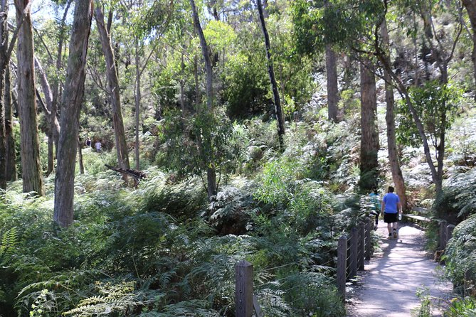 Self-Guided Waterfall Gully to Mount Lofty Hike from Adelaide - Attractions Sydney