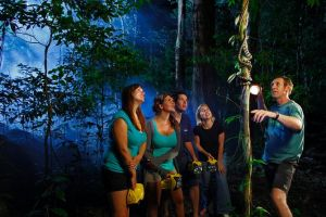 Daintree Rainforest Night Walk from Cape Tribulation - Attractions Sydney