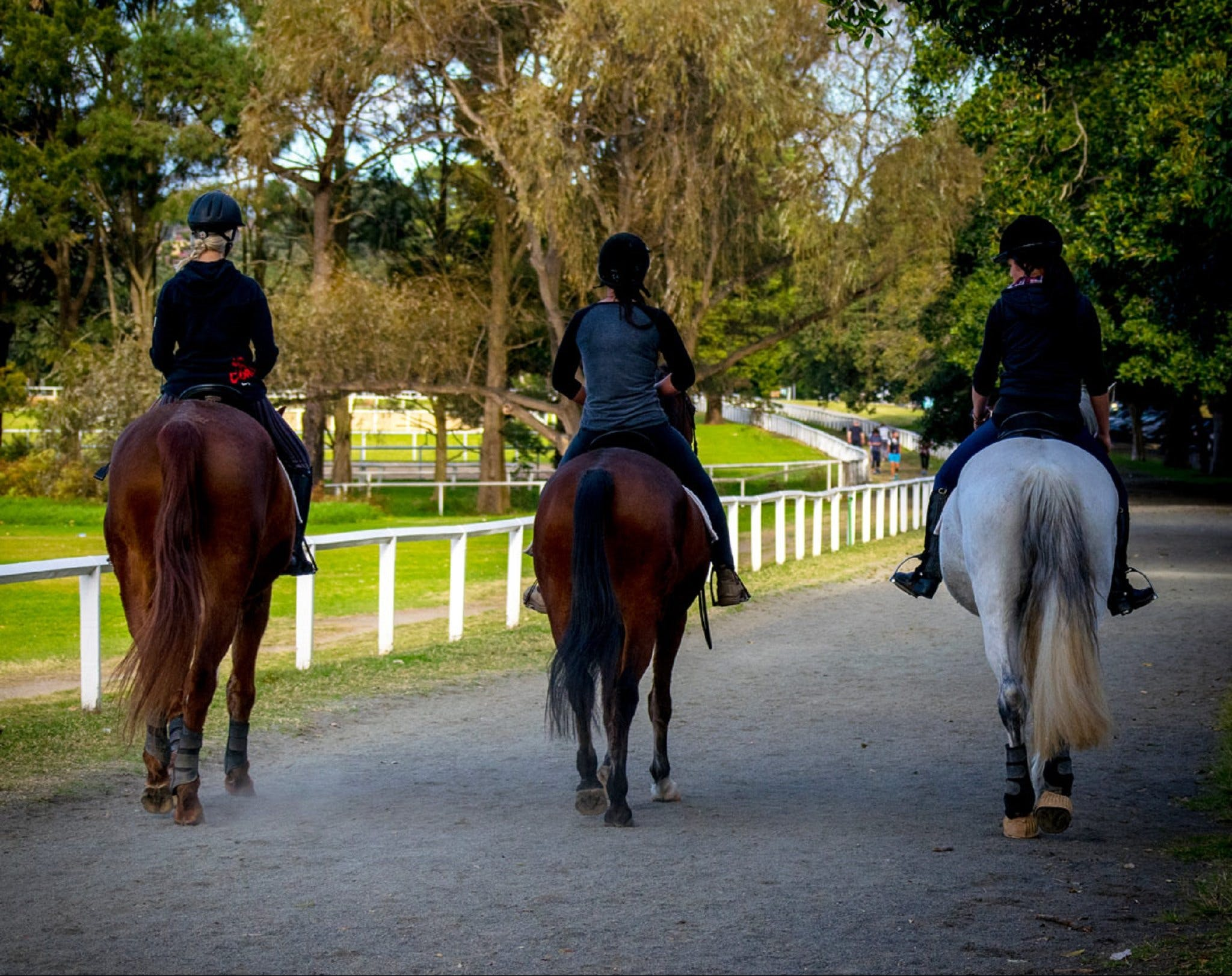 Centennial Stables - Attractions Sydney