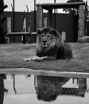 Hunter Valley Zoo - Attractions Sydney