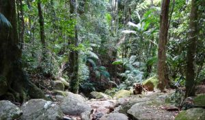 Lyrebird track - Attractions Sydney