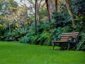 EG Waterhouse National Camellia Gardens - Attractions Sydney