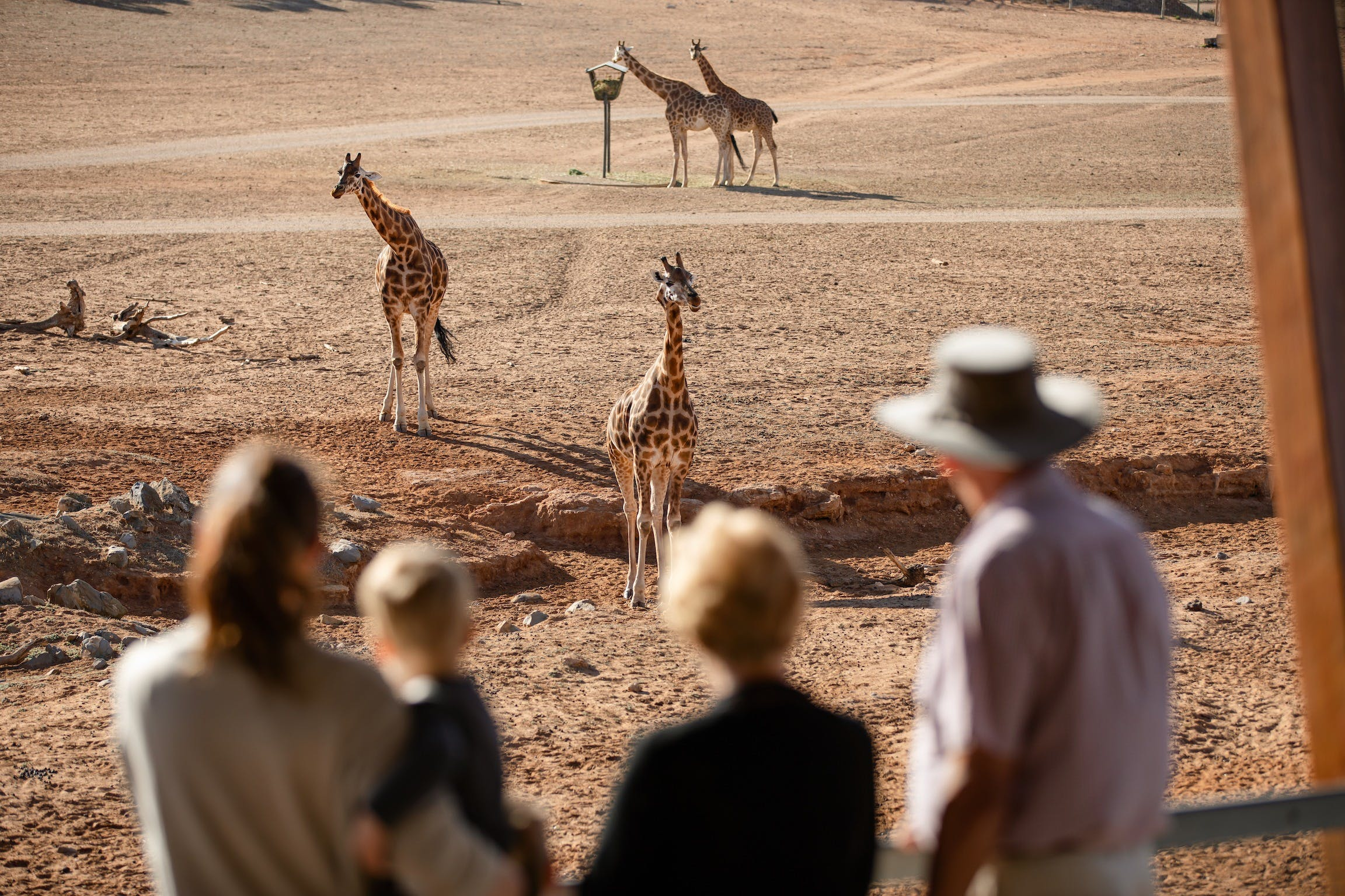 Monarto Safari Park - Attractions Sydney