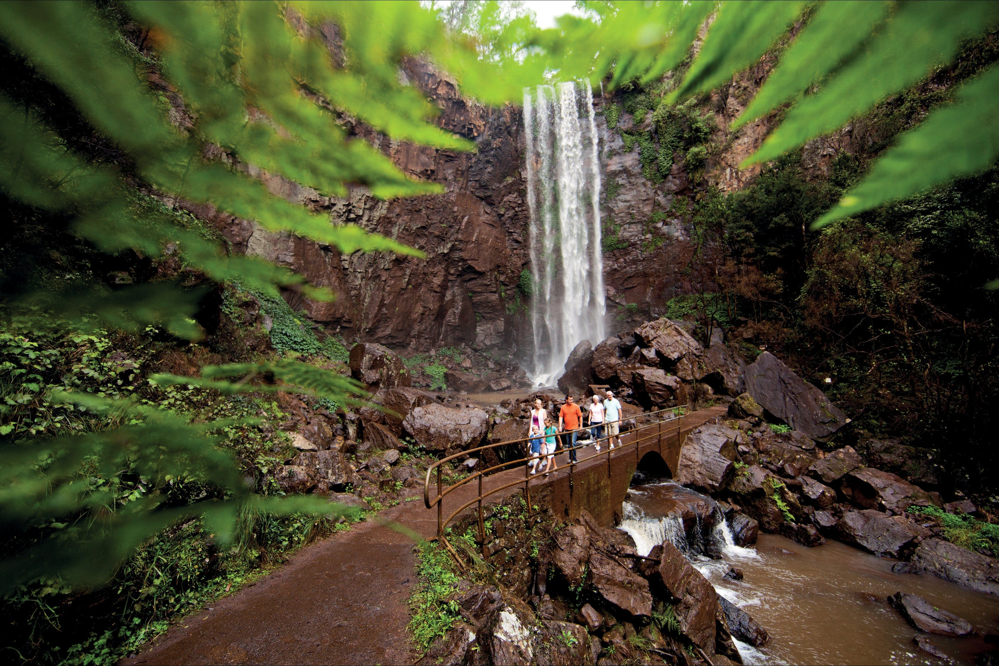 Queen Mary Falls circuit Main Range National Park - Attractions Sydney