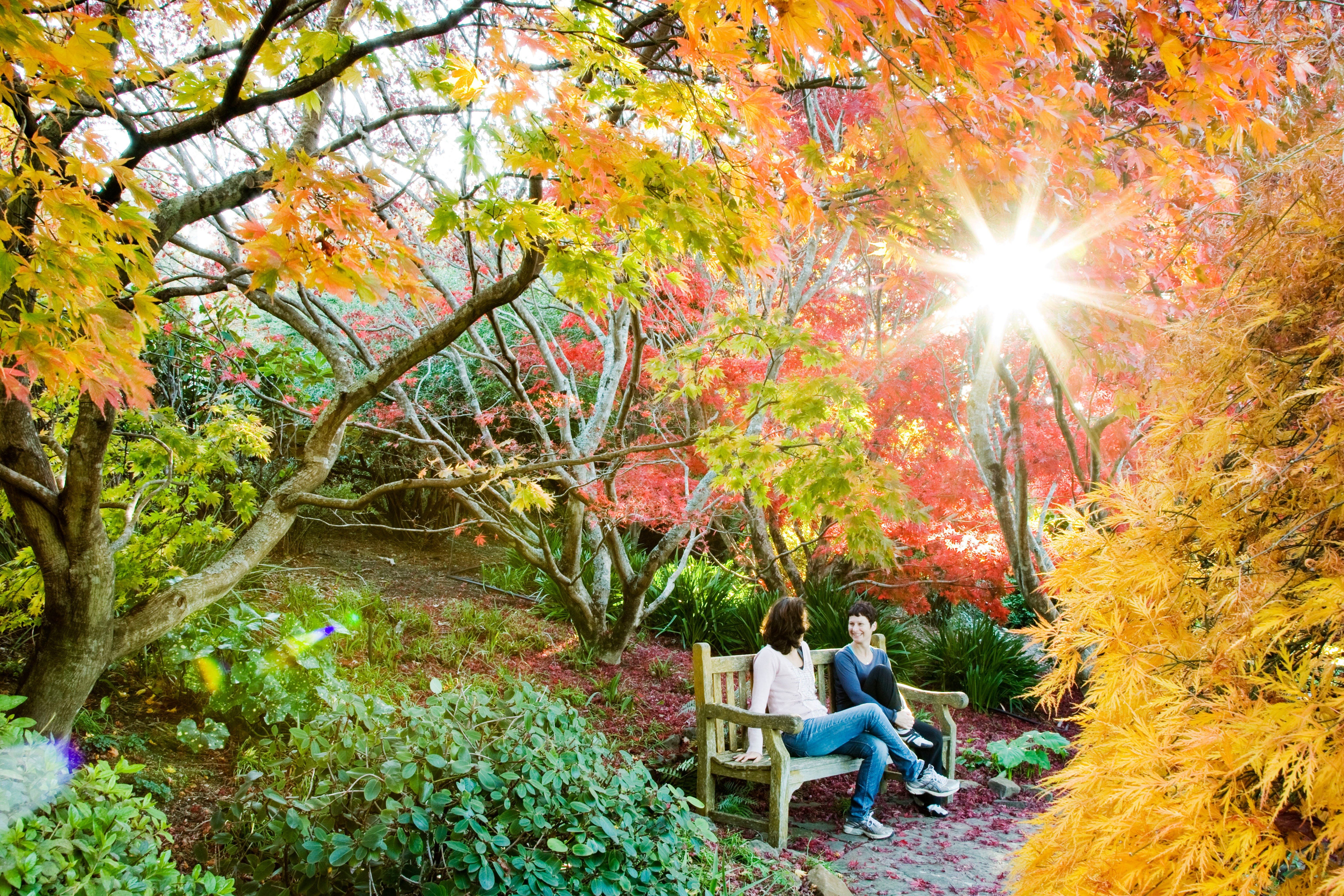 The Blue Mountains Botanic Garden Mount Tomah - Attractions Sydney