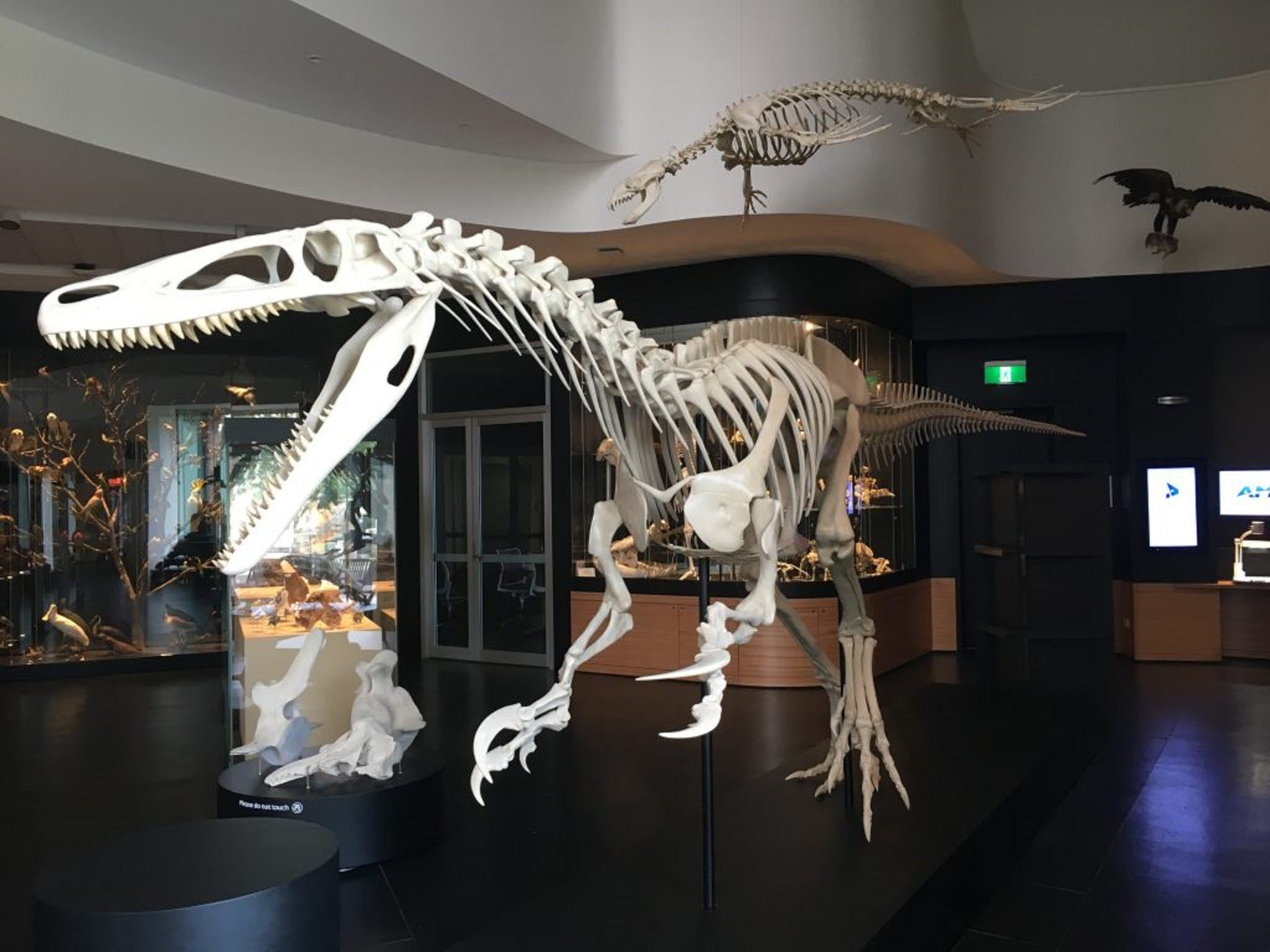 UNE Natural History Museum - Attractions Sydney