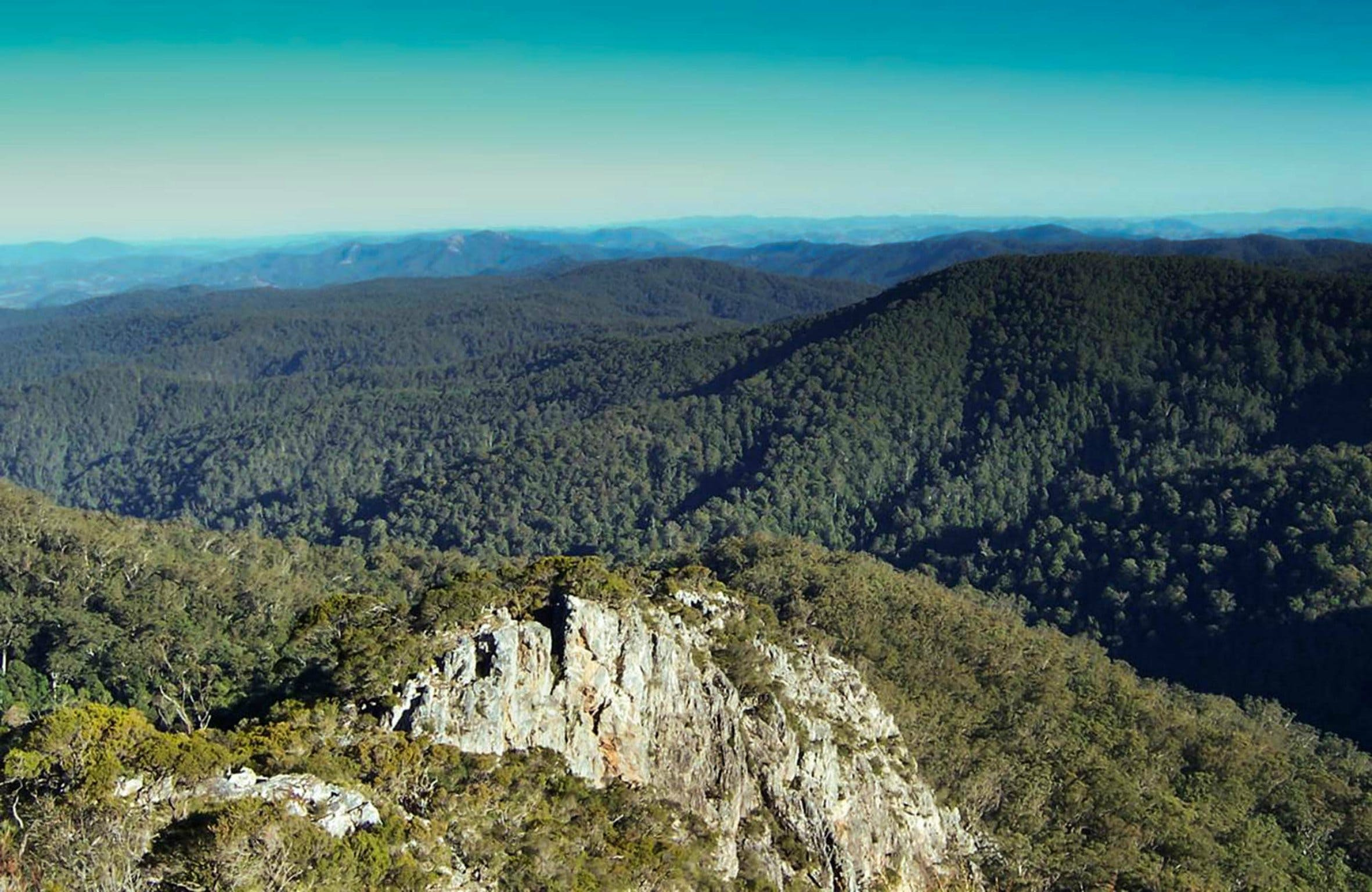 Tapin Tops National Park - Attractions Sydney