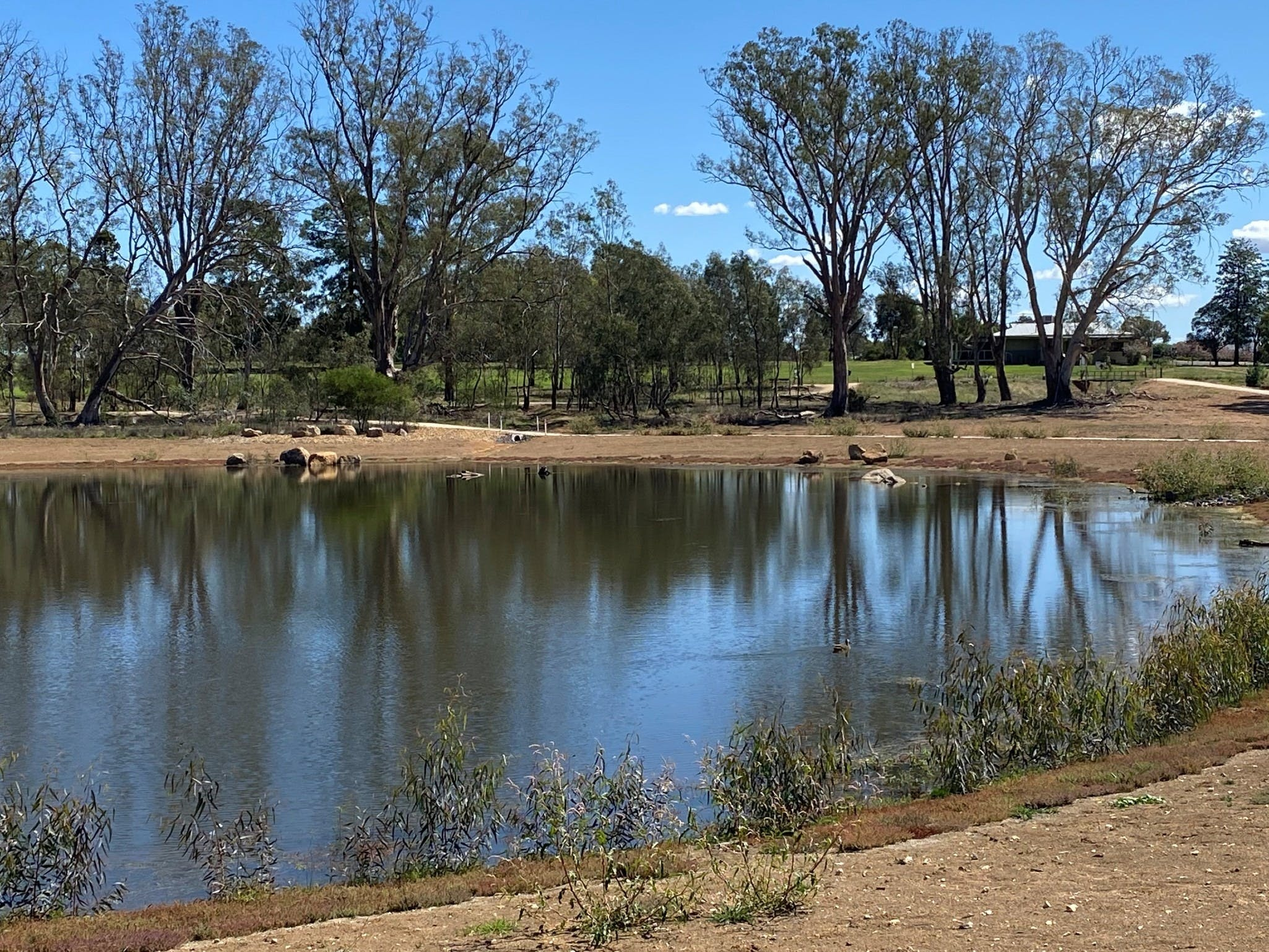 Lake King Wetlands at Rutherglen - Attractions Sydney