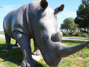Tailem Bend Rhino Park and Dickson Reserve - Attractions Sydney