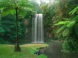 Atherton Tablelands - Attractions Sydney
