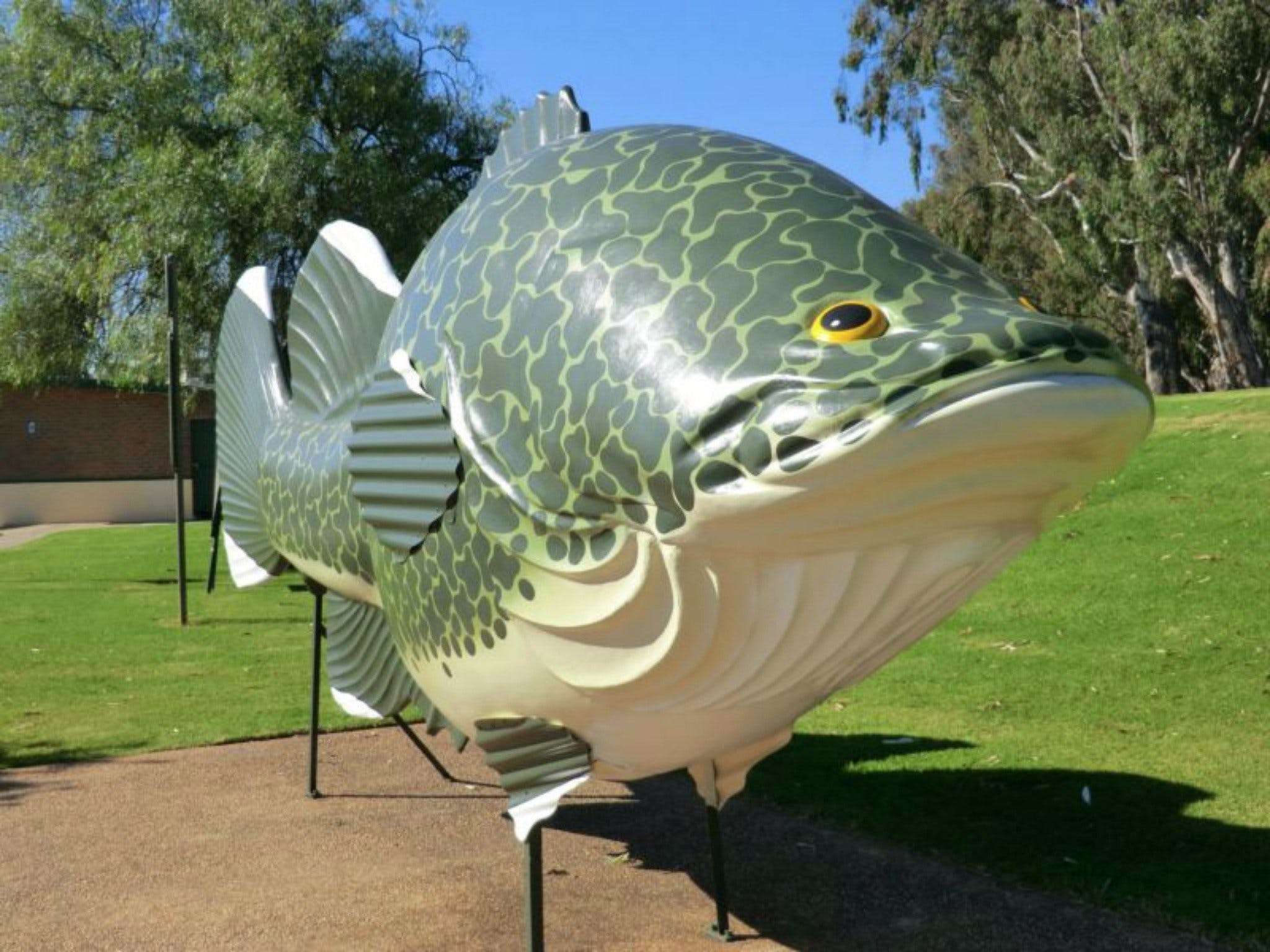 Big Murray Cod - Attractions Sydney