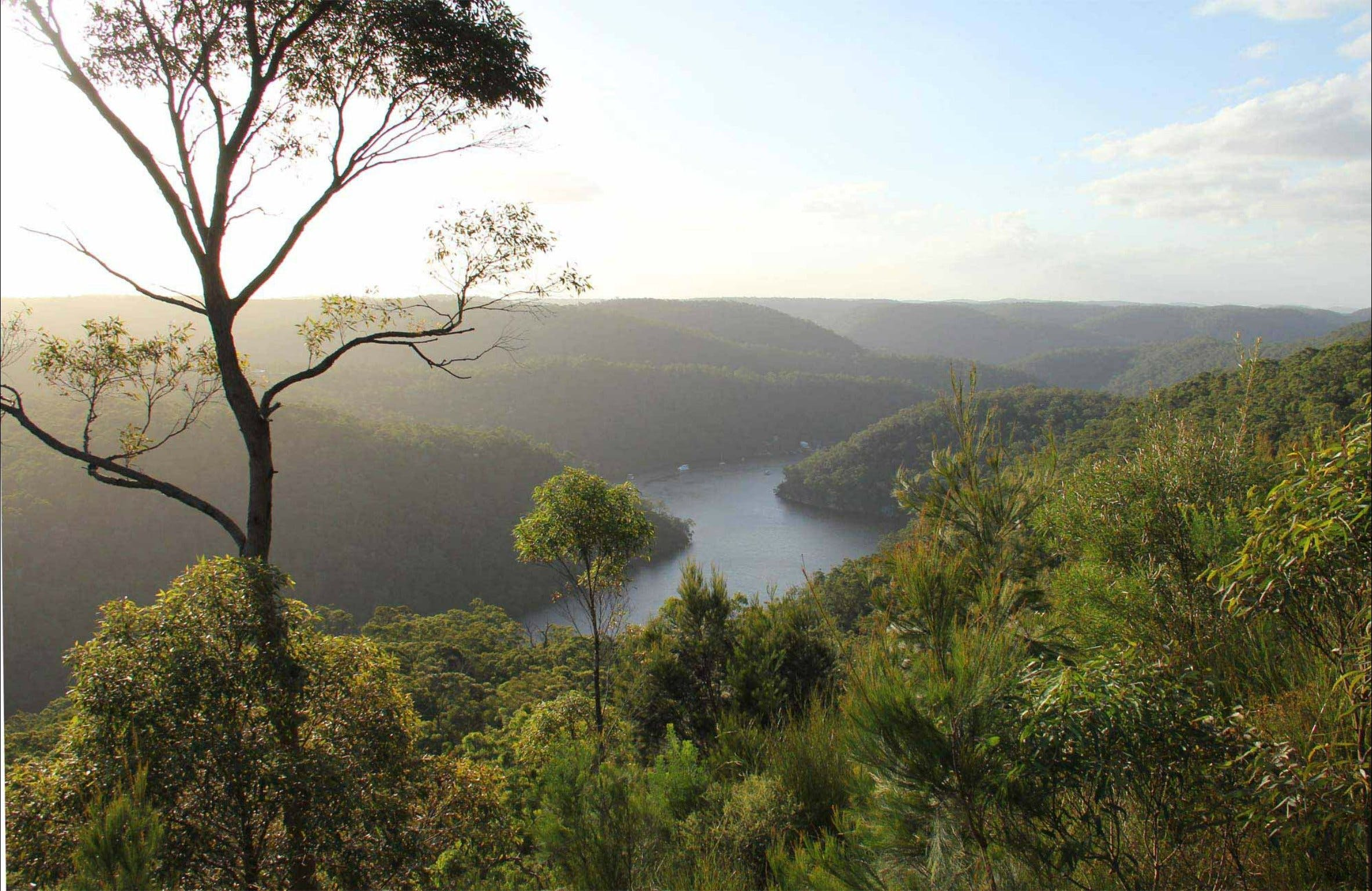 Great North walk - Berowra Valley National Park - Attractions Sydney
