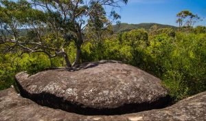 Marramarra Ridge to Smugglers Ridge walking track - Attractions Sydney