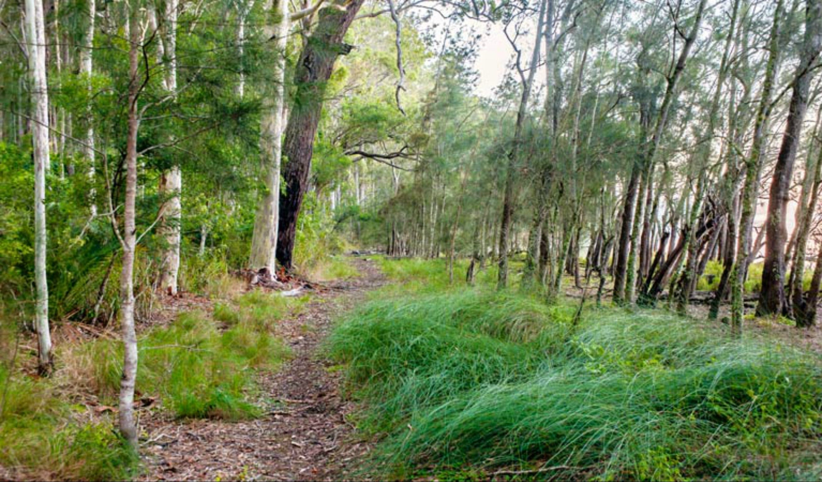 Meroo Lake walking track - Attractions Sydney