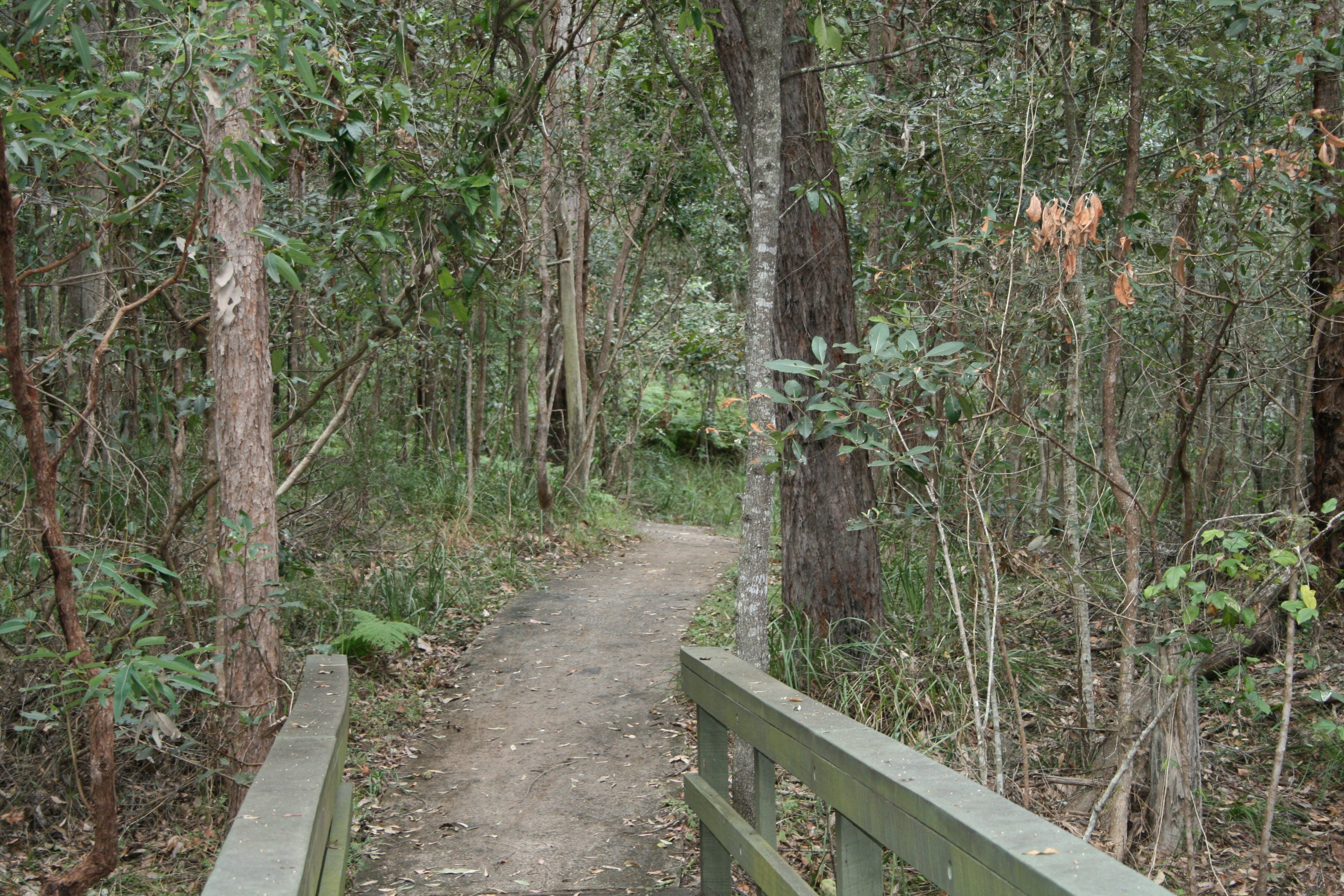 Springwood Conservation Park - Attractions Sydney