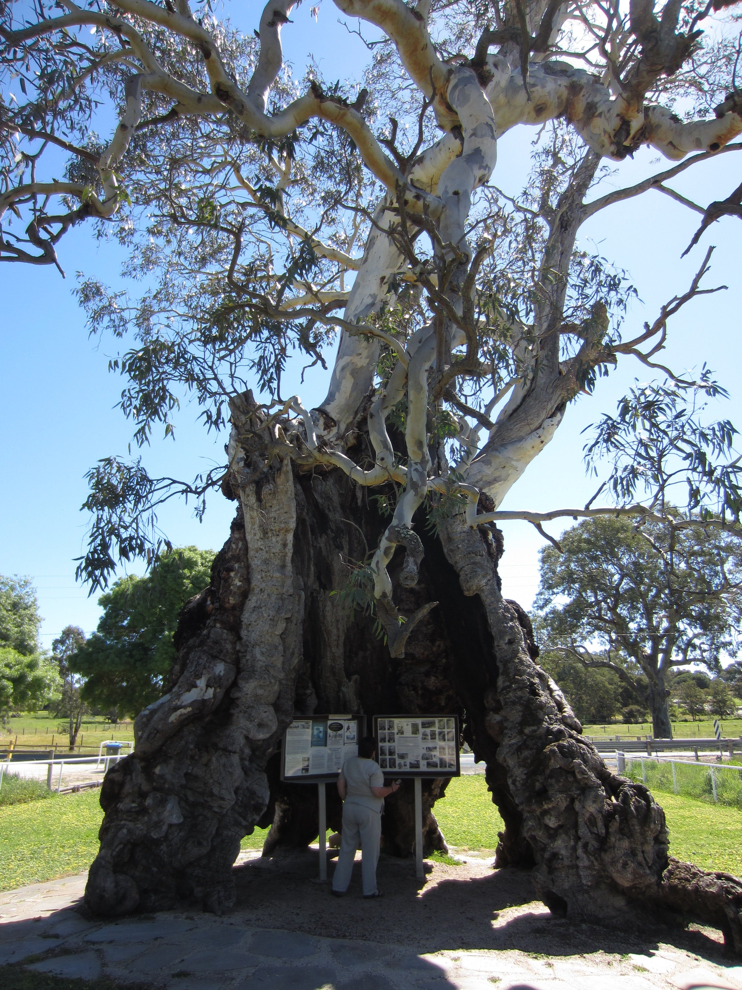 The Herbig Family Tree - Attractions Sydney