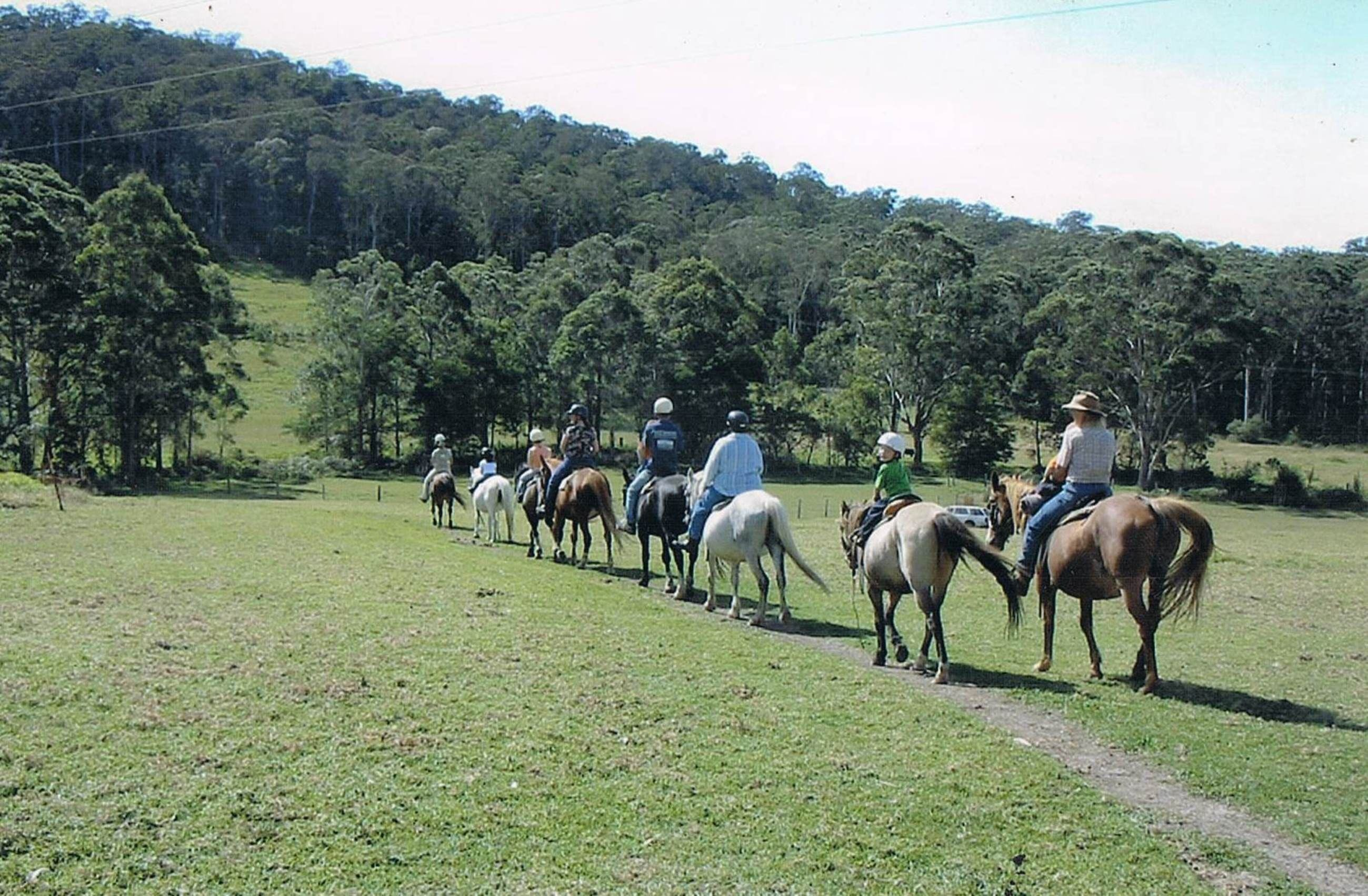 Timbertops - Horse Riding - Attractions Sydney