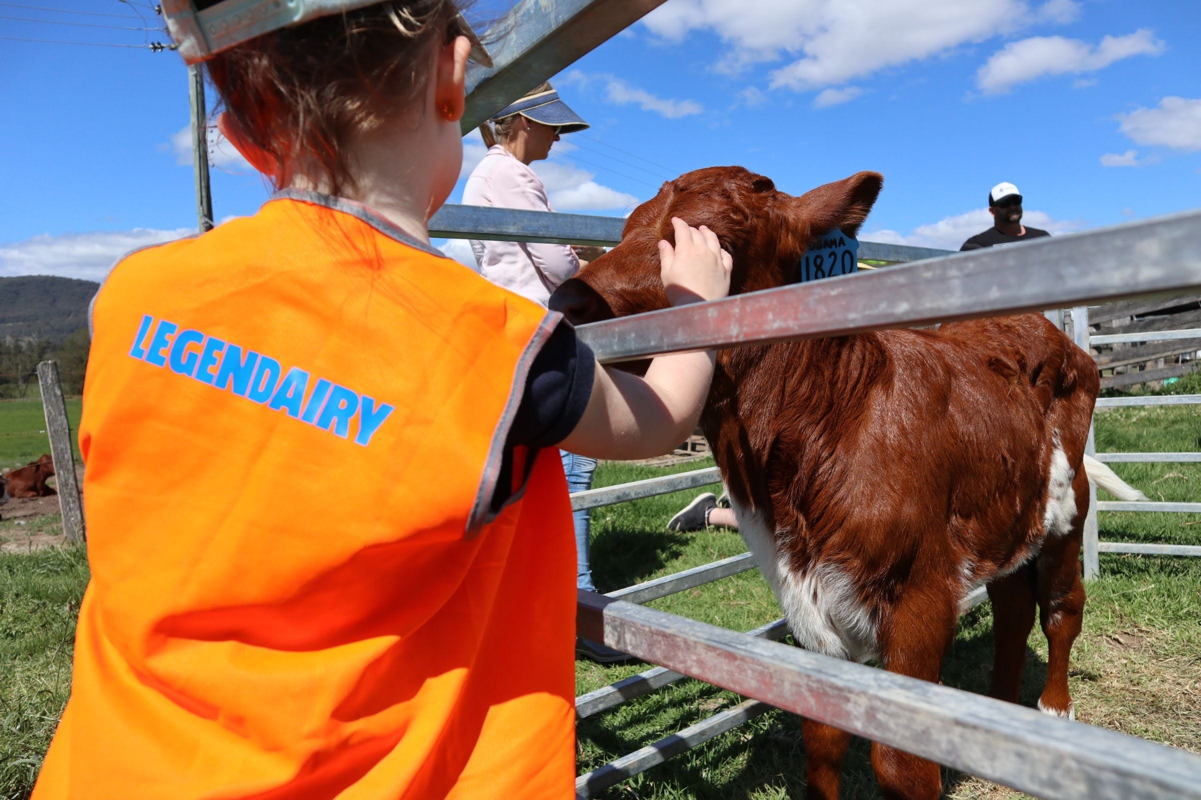Farm Visit  Dungog - Attractions Sydney