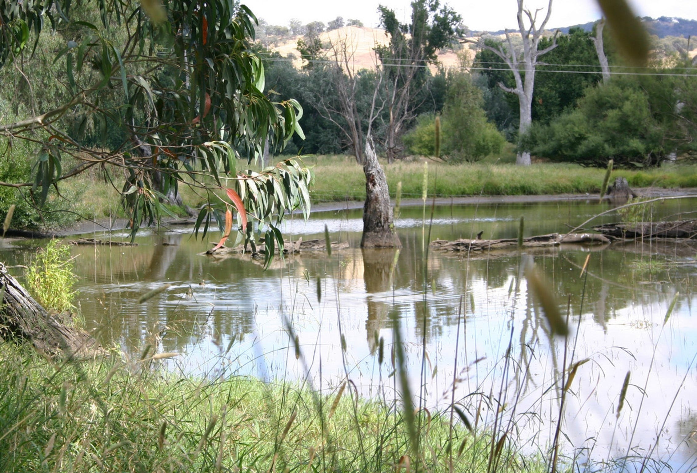 Tumut Wetlands - Attractions Sydney